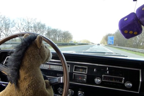 Turn on your images to see: Pony On The Autobahn (With Fuzzy Dice)